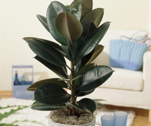 Растения для очистки воздуха в помещении